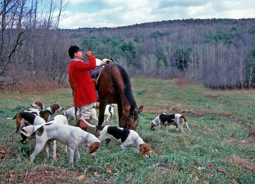 Cuidados de un perro de caza