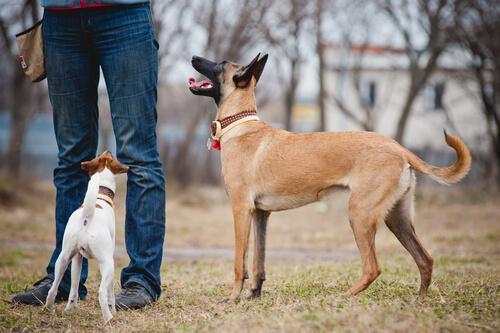 cachorros entendem as pessoas