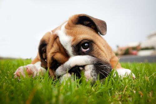 perros ladean la cabeza