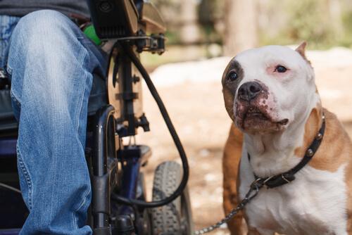 Vida cotidiana de los perros terapéuticos