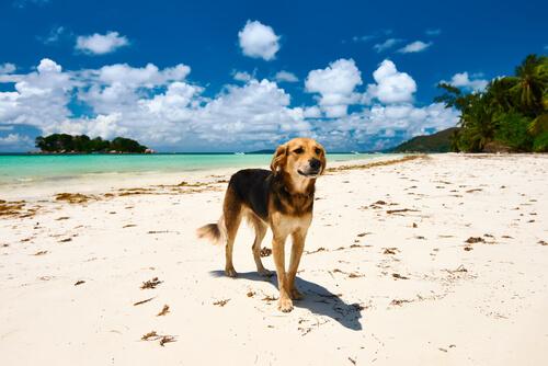 praia para cachorros