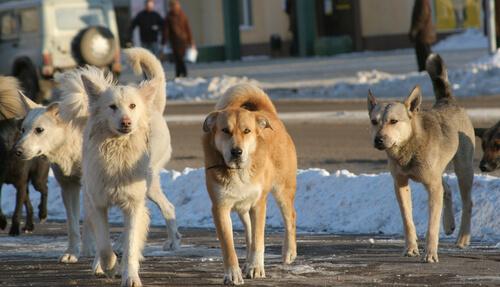 protectoras de animales