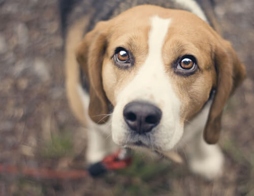 Limpiar los ojos y quitar las legañas a nuestras mascotas