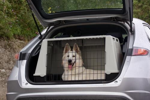 Perro en un transportin dentro de un coche
