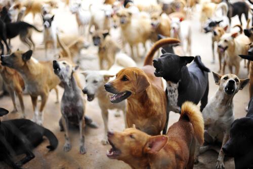 Síndrome de Noé: acumulación compulsiva de los animales