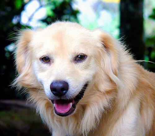 ¿Qué cuidados y atenciones requiere un perro adulto?