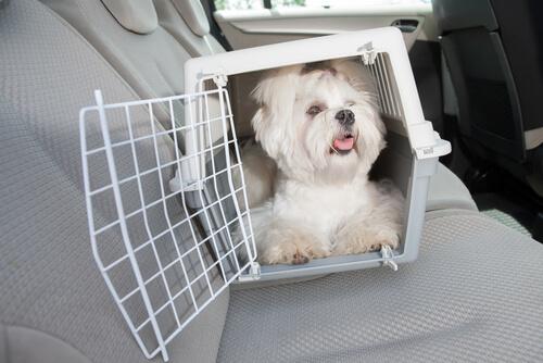 Perro en un transportín dentro de un coche