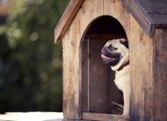 utensilios y productos caninos