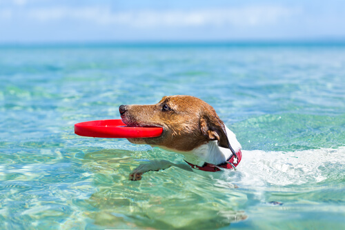 vacaciones perro