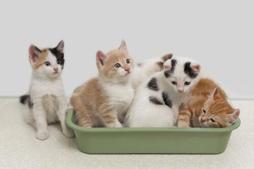 Conoce esas ventajas de la arena biodegradable para gatos