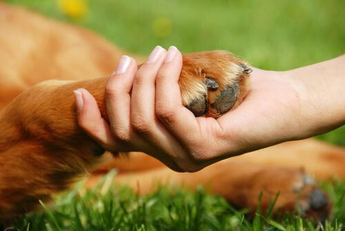 ayudar a los animales