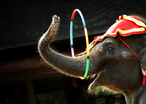 circos con animales