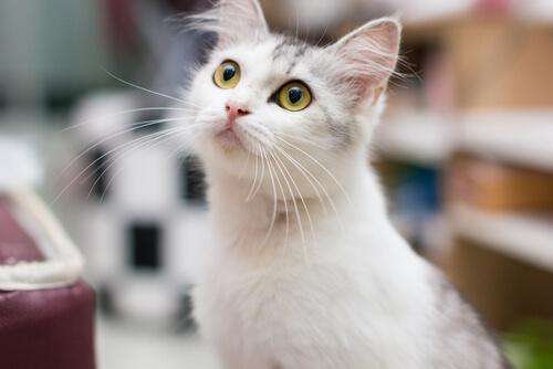 ¿Qué quiere tu gato según su comportamiento?