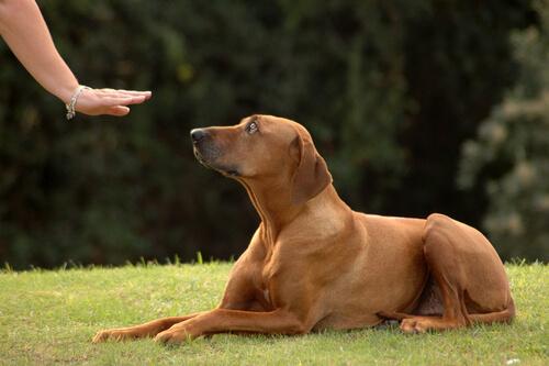 Pessoa adestrando cão