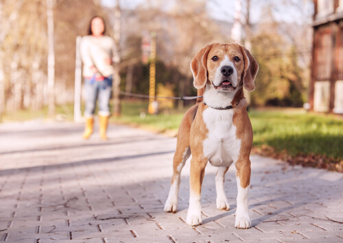 Siete tipos de correas para perros