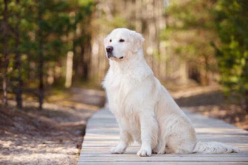 Algunos derechos que tu perro tiene y no sabías