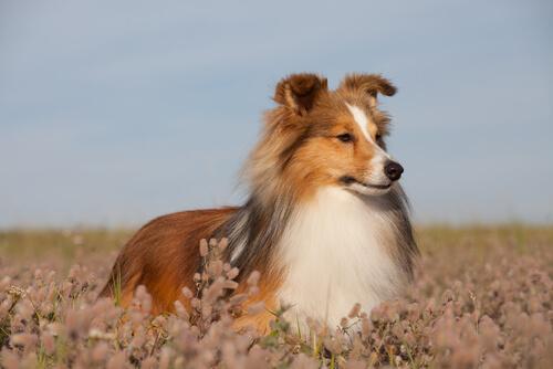 Las enfermedades de piel más comunes en perros