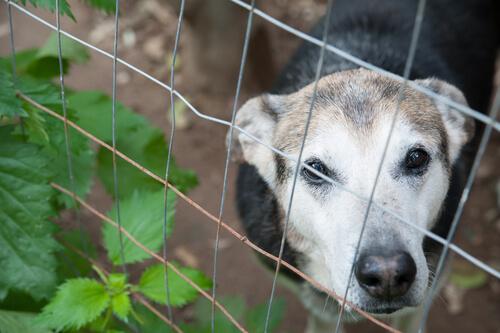 escuadron orejitas perro abandonado