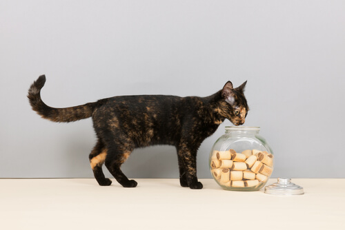 Galletas para gato