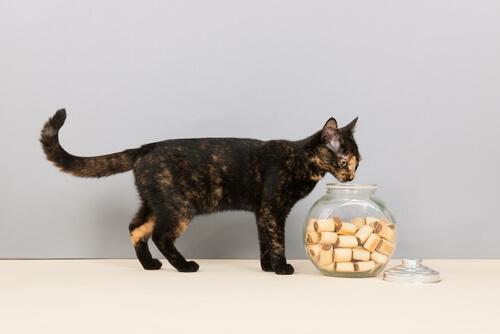 Cómo preparar golosinas para tu gato