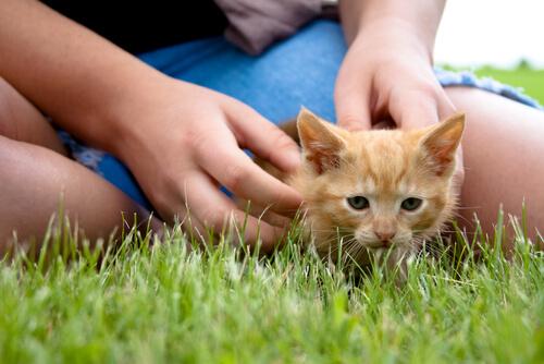 Un estudio revela que las mascotas ayudan a combatir estrés