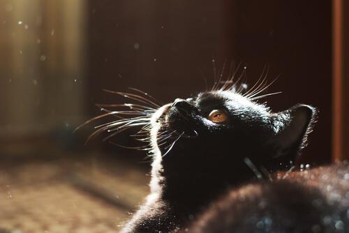 gato y oscuridad