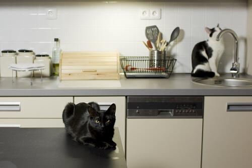 gatos en la cocina