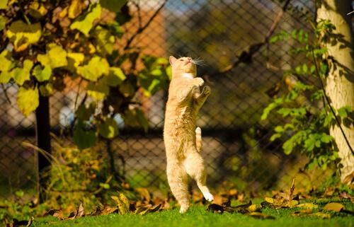 ¿Qué es la hiperestesia o el síndrome del gato nervioso?