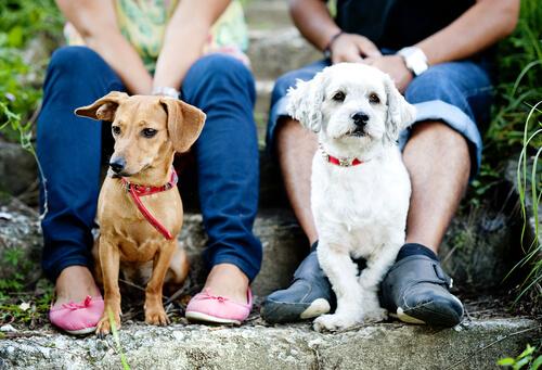 interactuar con otros perros