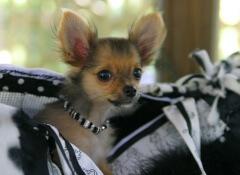 modas en perros