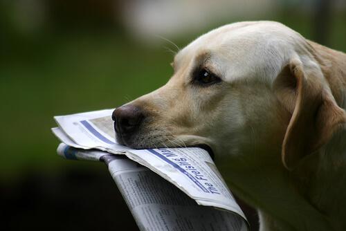 Owney, un perro viajero convertido en toda una celebridad en los EE.UU.