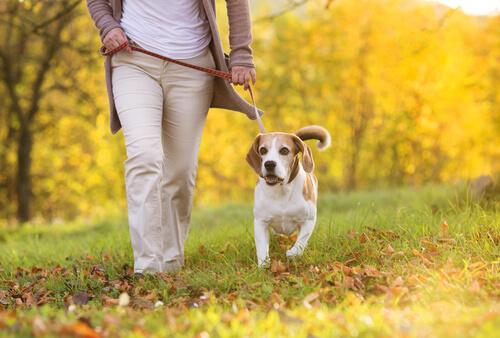 Cachorro passeando