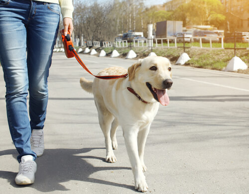 passear com seu cachorro