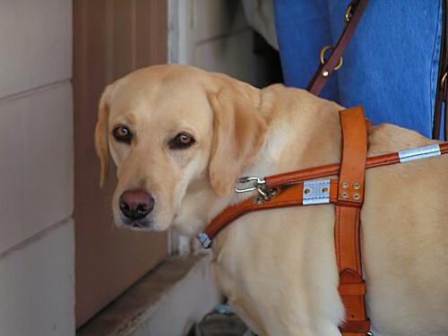 Una perrita salva la vida de su dueña ciega durante un incendio