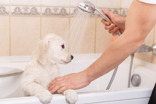 filhote tomando banho