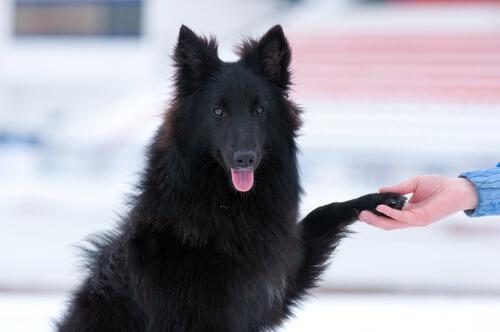 Los perros ignoran a las personas que no les gustan a sus dueños