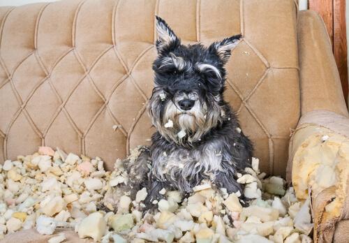 Cachorro destrói tudo