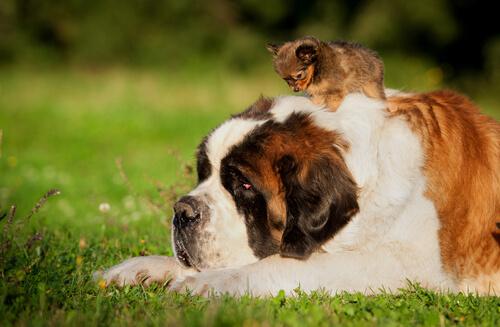 Cachorro grande e pequeno