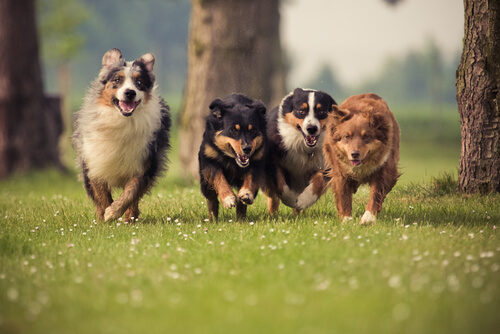 perros sarna