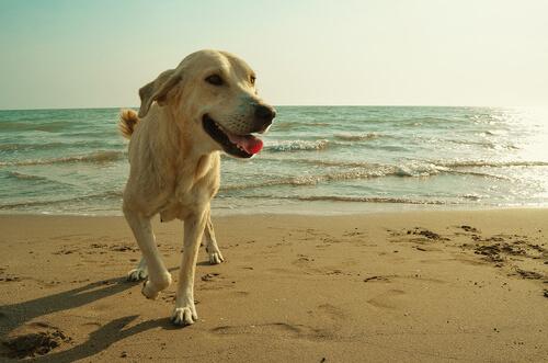 Entrenamiento de los perros socorristas