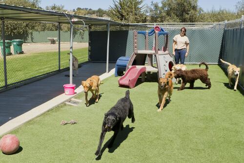 perros y gatos recogidos