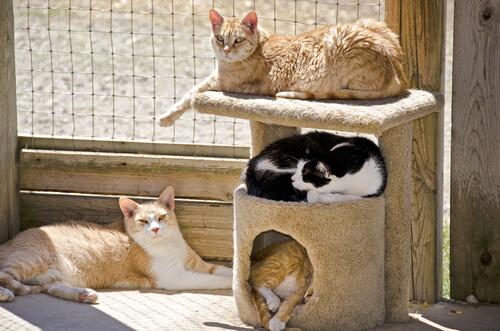Gatos en un rascador