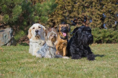 Diferencias entre la multitud de razas caninas