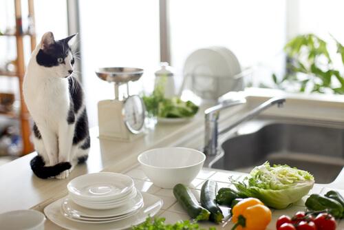 Salud para tu mascota e higiene para tu cocina