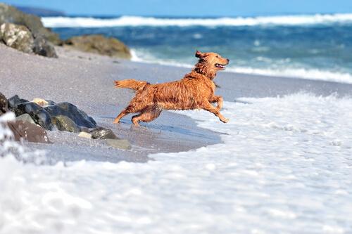 seguridad de tu perro.playa