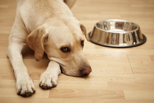 tuberculosis en los perros