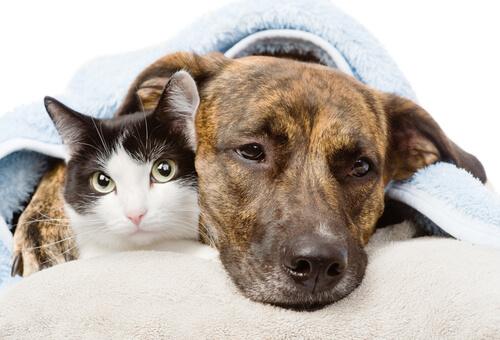 Antiinflamatorios en perros y gatos: riesgo mortal