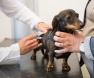 vacunación para perros