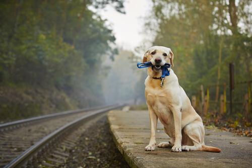 De viaje en tren con tu mascota. ¿Qué hay que tener en cuenta?