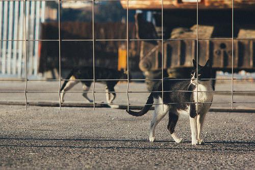 Abandono animal: problema global de nuestro tiempo